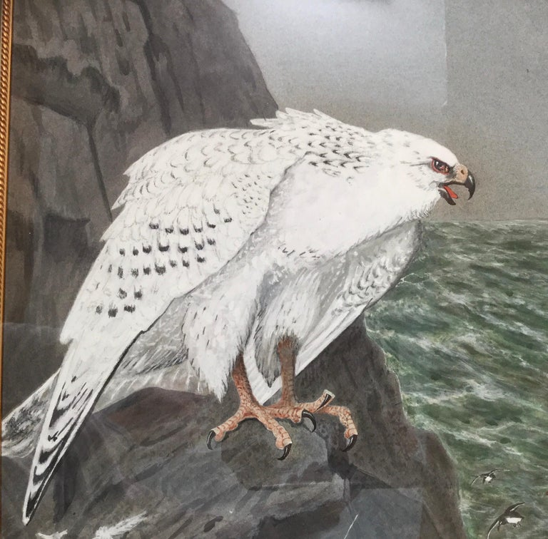 E.M.Haskel Gouache on Paper Painting of Gyr Hawk Bird For Sale 1