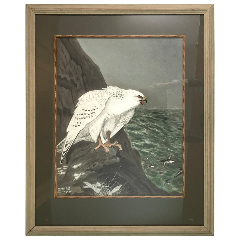 E.M.Haskel Gouache on Paper Painting of Gyr Hawk Bird For Sale