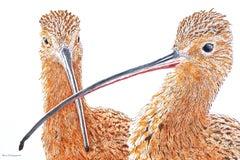 A Pair of Curlews, Original Painting