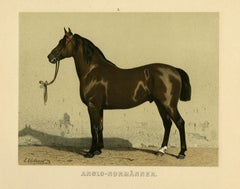 Anglo Normanner - Anglo Norman horse by Emil Volkers -Pl.2-Lithograph - 19th c.