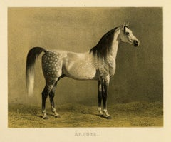 Araber - Arabian horse by Emil Volkers - Plate 3 - Lithograph - 19th c.