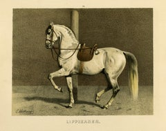 Lippizan horse - Spanish riding school by Emil Volkers - Lithograph - 19th c.