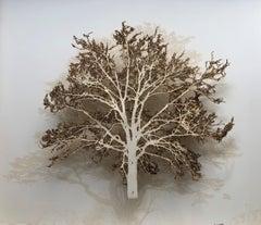 Cedar Oak - contemporary mixed media artwork nature tree framed glazed
