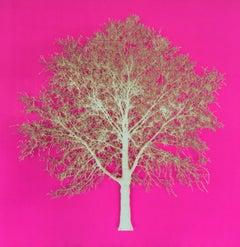 Pink Oak -  delicate lasercut image of gold tree framed glazed