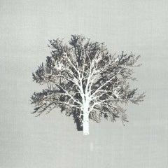 Emma Levine, White Oak, Original Paper Cut, Contemporary Minimalist Artwork