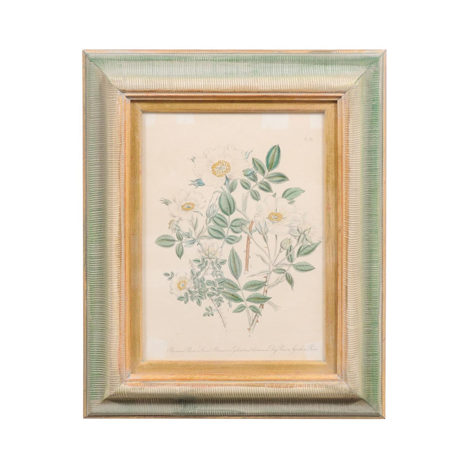 English 19th Century Victorian Framed Print Depicting White Eglantine Roses