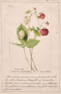 FINE 1860'S ENGLISH BOTANNICAL WATERCOLOUR DRAWING STRAWBERRIES FROM A CASTLE