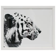 English Black and White Tiger Cat Animal Photo Print with White Frame