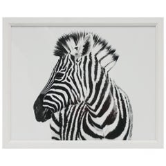 English Black and White Zebra Animal Photo Print with White Frame
