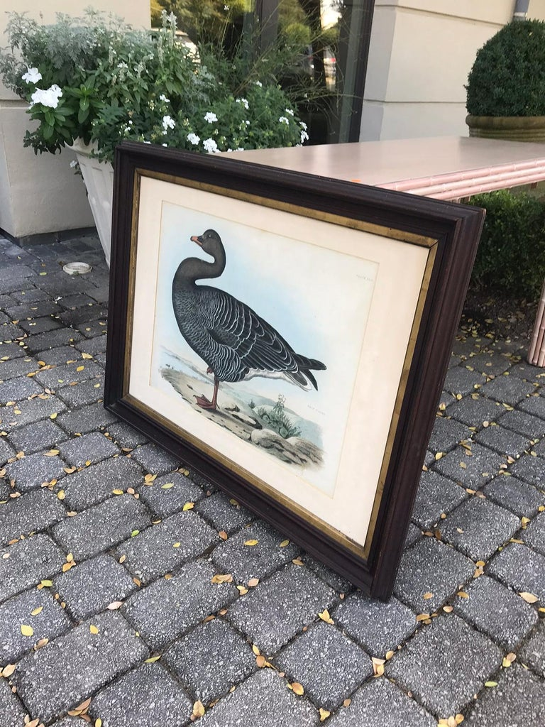 English Hand Colored Engraving of Bean Goose by Prideaux John Selby For Sale 4