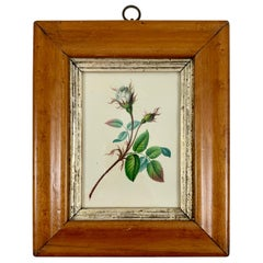 English Regency Period Original Watercolor in Fruitwood Frame, White Hairy Rose