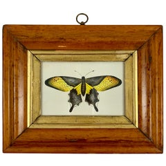 English Regency Period Original Watercolor in Fruitwood Frame, Yellow Butterfly