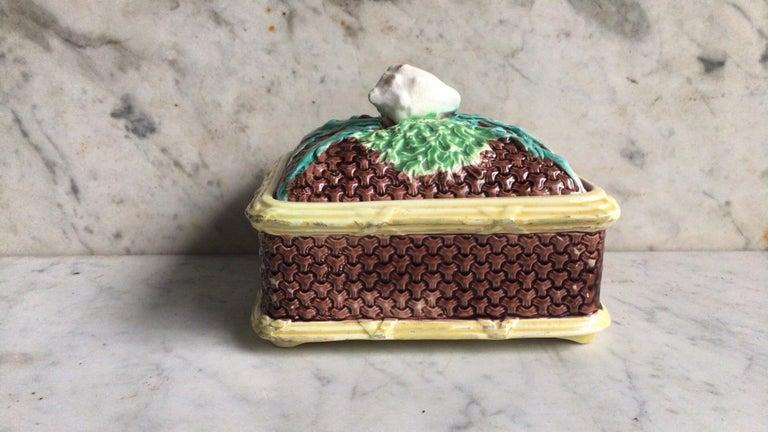 English Victorian sardine box with shell, circa 1890.