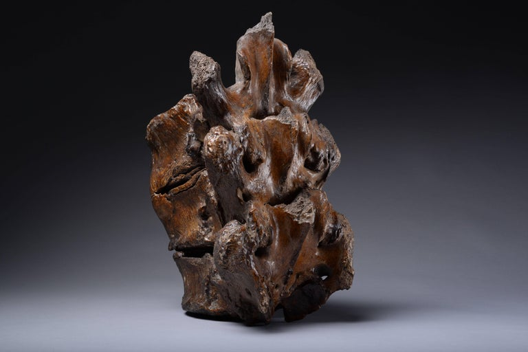 Enormous Prehistoric Ice Age Vertebrae of a Straight Tusked Elephant In Excellent Condition For Sale In London, GB