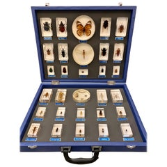Entomology Specimen Collection in Display Case