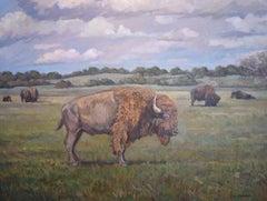 """Bison"" Buffalo Landscape"