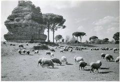 Rome - Via Appia 1954