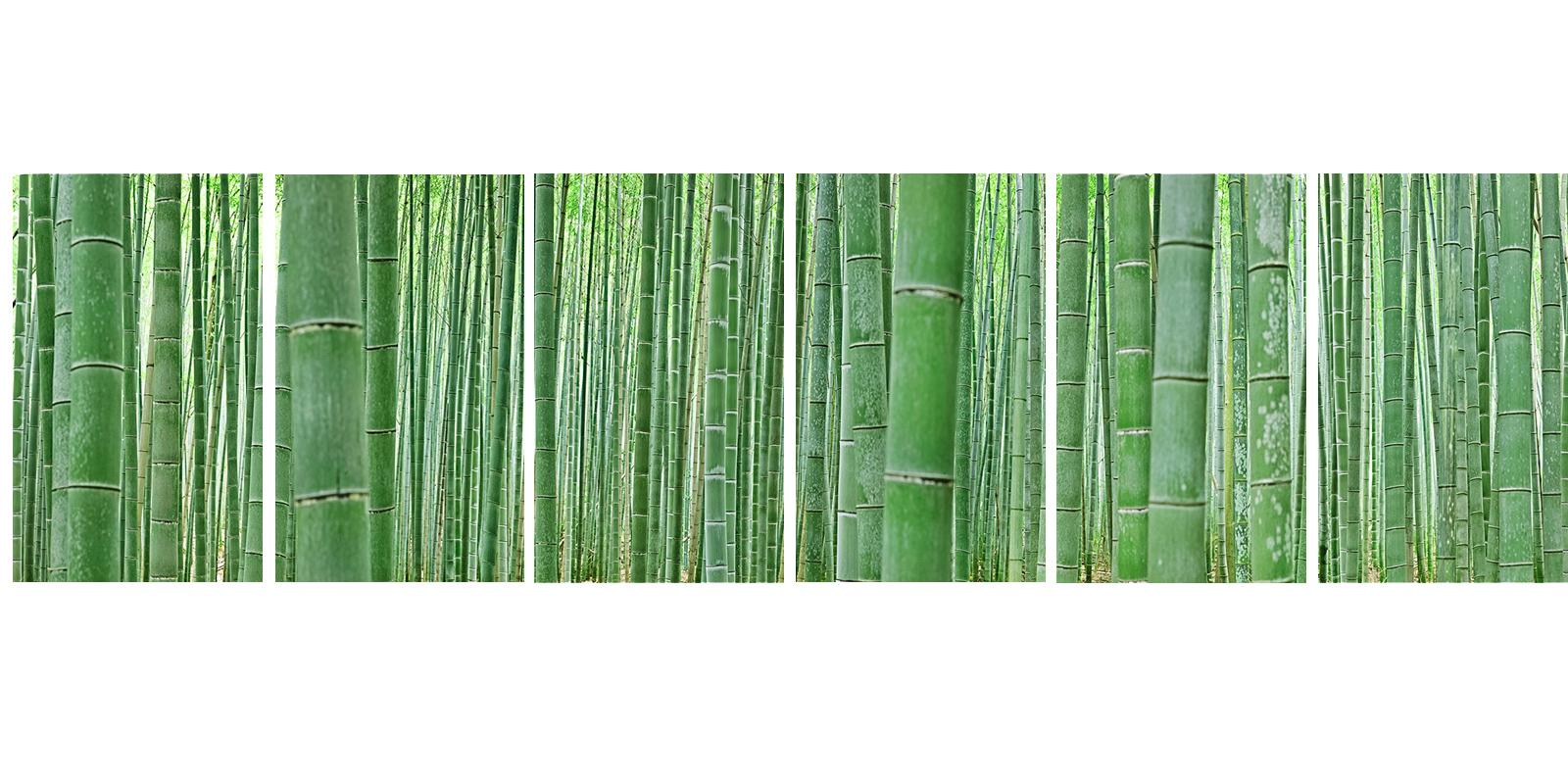 Bamboo Forest (6 panels) - abstract nature observation of iconic Japanese grove