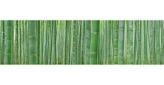 Bamboo Forest - nature observation of iconic Japanese bamboo grove