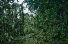 Cloud Forest II  -large format photograph of fantastical tropical rainforest