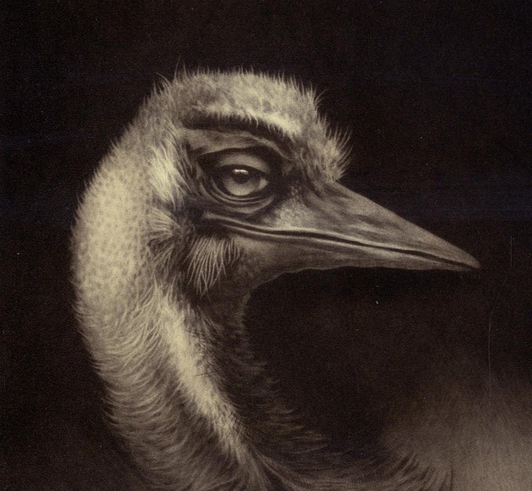 Birdheads (two beaked birds facing off) - Print by Erling Valtyrson