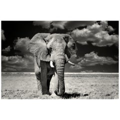 Etosha Elephant, Black and White Photographie Fine Art Print by Rainer Martini