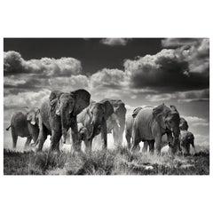 Etosha Elephants, Black and White Photographie Fine Art Print by Rainer Martini