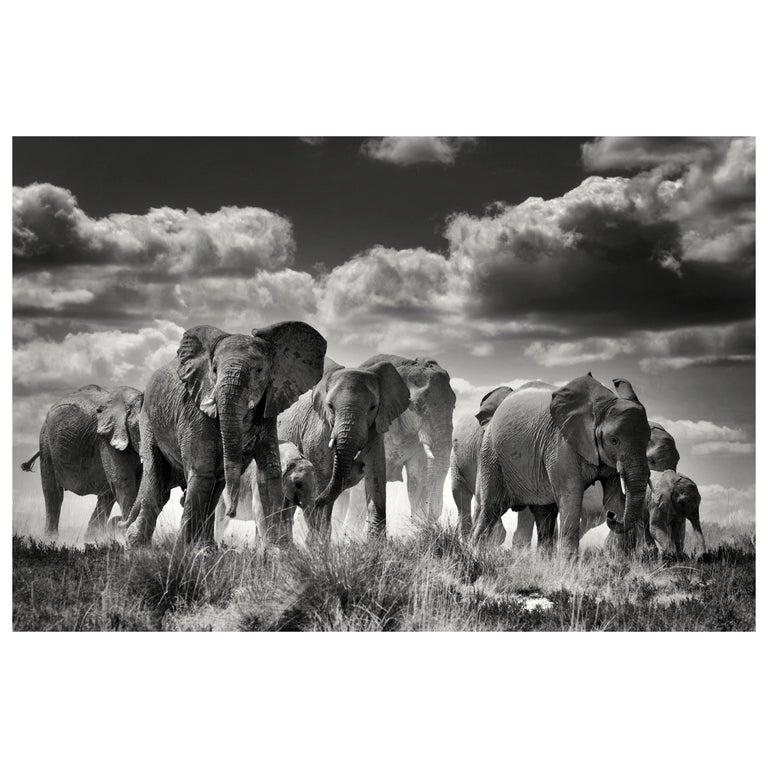 Etosha Elephants, Black and White Photographie Fine Art Print by Rainer Martini For Sale