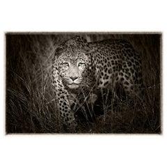 Etosha Leopard II, Black and White Photography, Fine Art Print by Rainer Martini