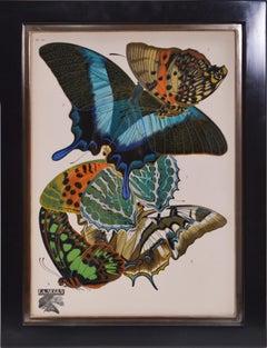 SEGUY. A Group of Six Papillons. Lithographs en pochoir.