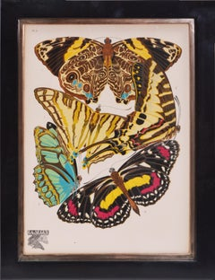 Seguy, set of six Butterflies, Lithograph, 1929