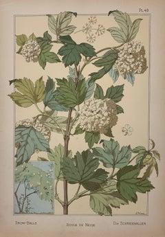 La plante et ses Applications Ornamentales Volumes 1 and 2
