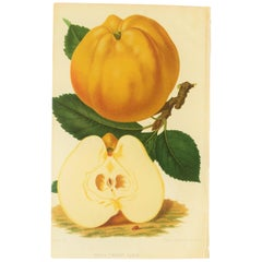 European Botanical White Apple Fruit Wall Art Chromo, 19th Century