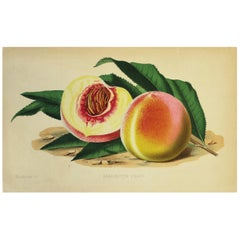 European Fruit Peach Botanical Wall Art Chromo, circa 19th Century