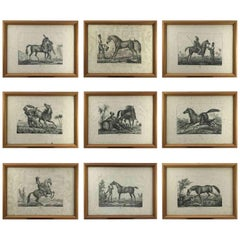 European Horse Breeds Nine Lithographs by Italian Giarrè Luigi 1822 Firenze