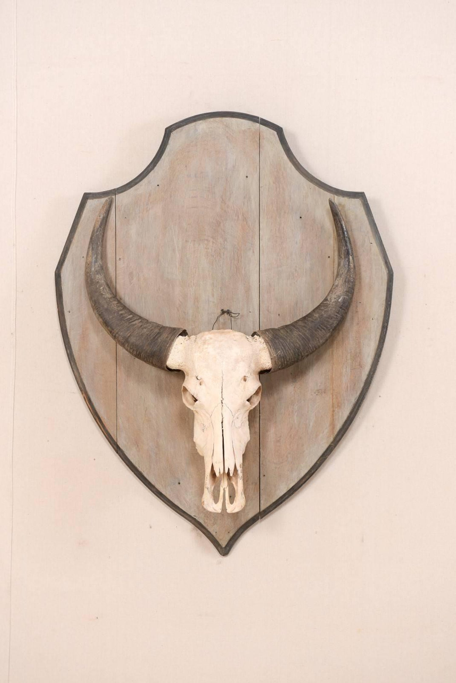 f16eea46904 European Vintage Water Buffalo Skull Mounted on Shield-Shaped Wood Plaque  For Sale at 1stdibs