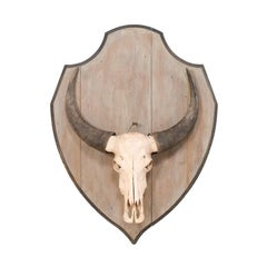 European Vintage Water Buffalo Skull Mounted on Shield-Shaped Wood Plaque