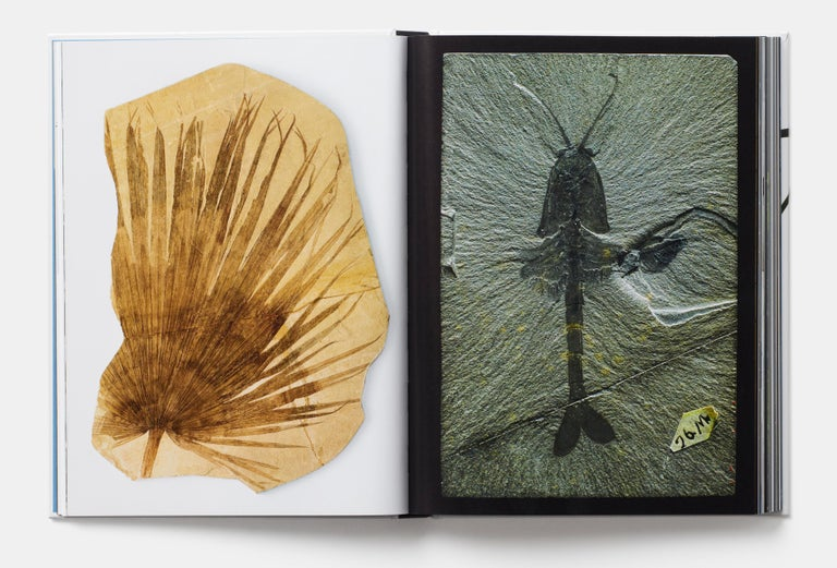 Evolution: A Visual Record In Excellent Condition For Sale In London, GB