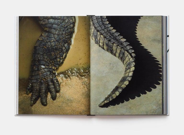 Contemporary Evolution: A Visual Record For Sale