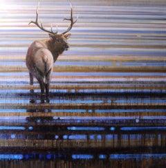 Wading Elk