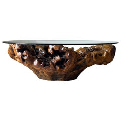 Extra Large Walnut Root Glass Top Coffee Table, Spain, Mid Century