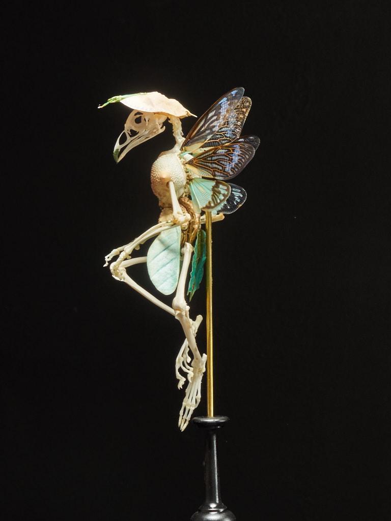 Belgian Extraordinary Chimera Composition under Glass Globe