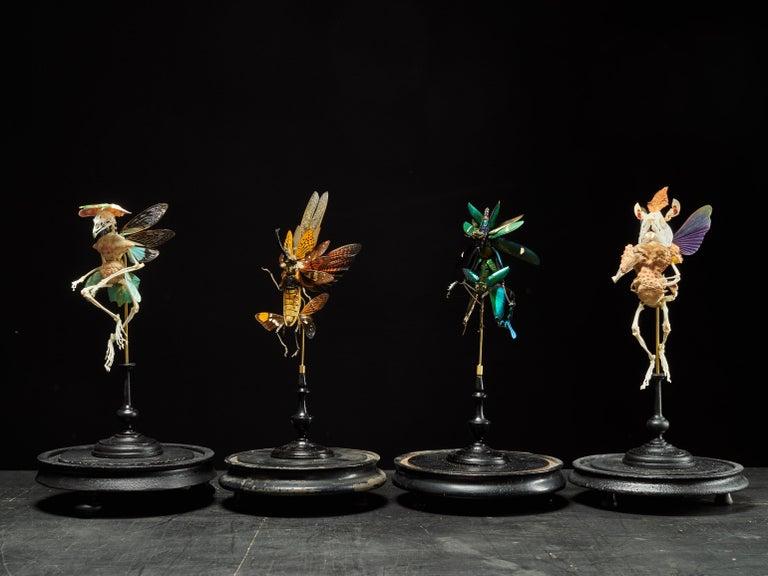 Extraordinary Chimera Composition under Glass Globe 1