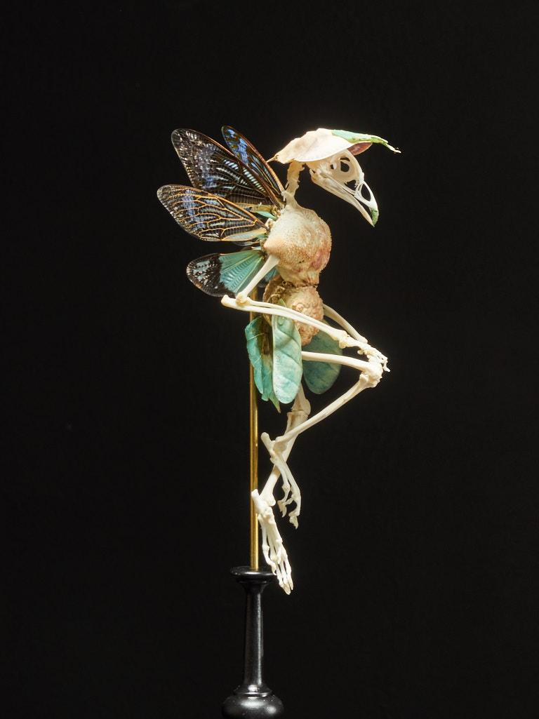 The figure's legs and arms are made off the bones of a small bird. The limbs are attached to the body, which consist of two light orange shells, each with a subtle dotted texture. The head of the figure is made out of the skeleton of a bird as well.