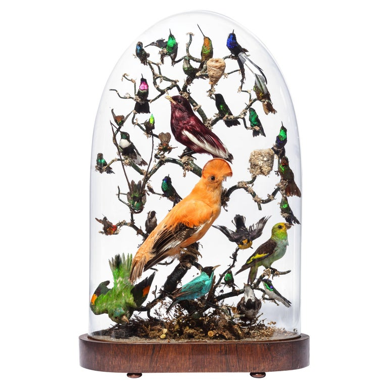 Extremely Fine Victorian Dome Taxidermy with Central-American Birds 19th Century For Sale