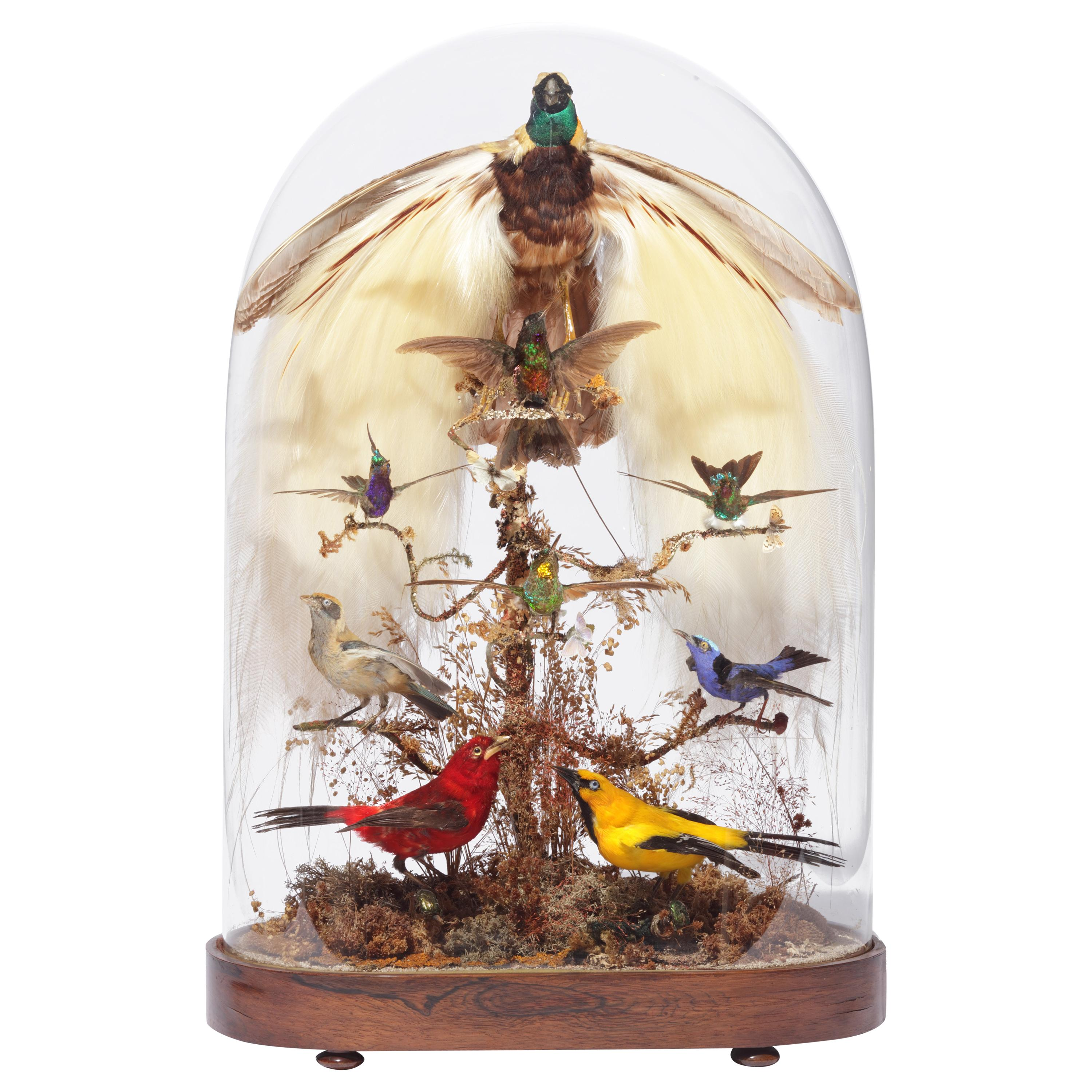 Fabulous Victorian Taxidermy Dome with Taxidermy Bird-of-Paradise, 19th Century
