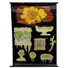 Fantastic Wall Chart Botany Plants Yellow Wall Lichen Jung Koch Quentell