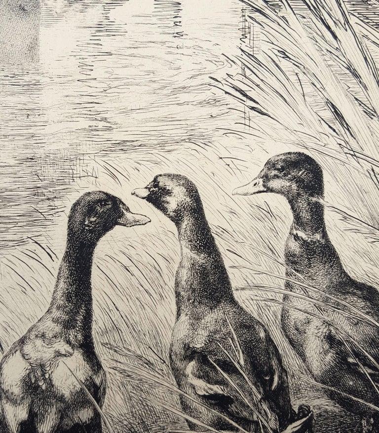 Canards Surpris (Surprised Ducks) For Sale 9