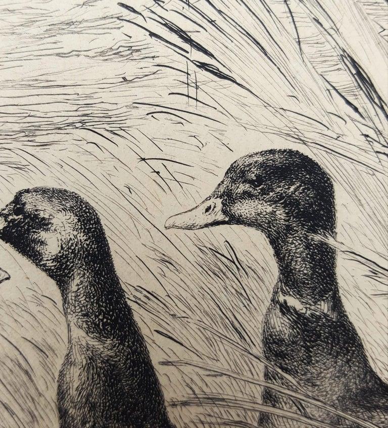 Canards Surpris (Surprised Ducks) For Sale 10