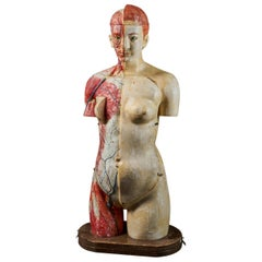 Female Life-Size Anatomical Ecorche Torso Model, Shimadzu Corp